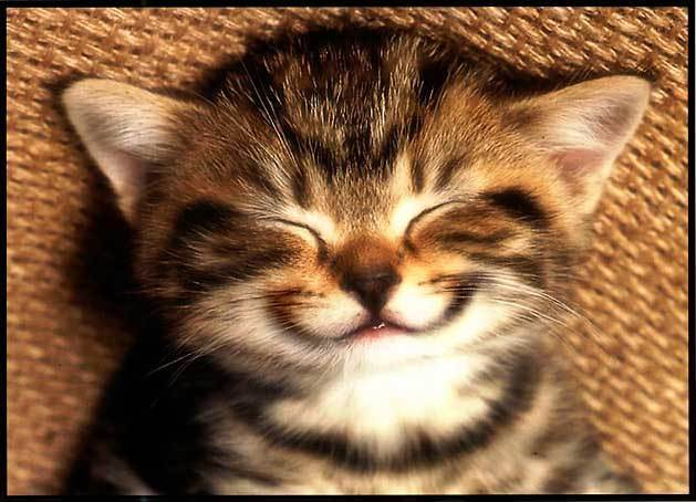 smiling_cat_small